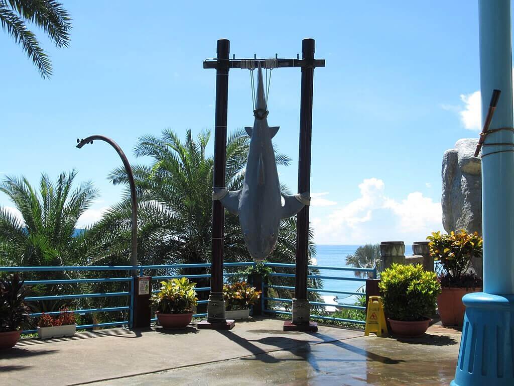 花蓮遠雄海洋公園的圖片:吊掛的鯊魚造景