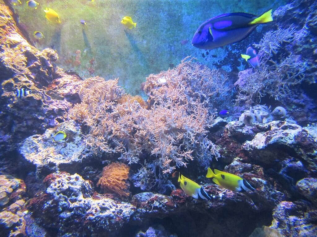 花蓮遠雄海洋公園的圖片:美麗的珊瑚與熱帶魚