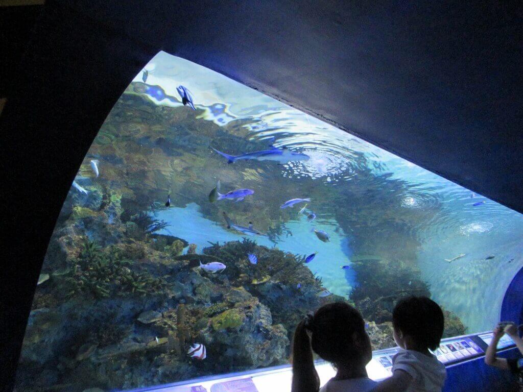 花蓮遠雄海洋公園的圖片:水底隧道