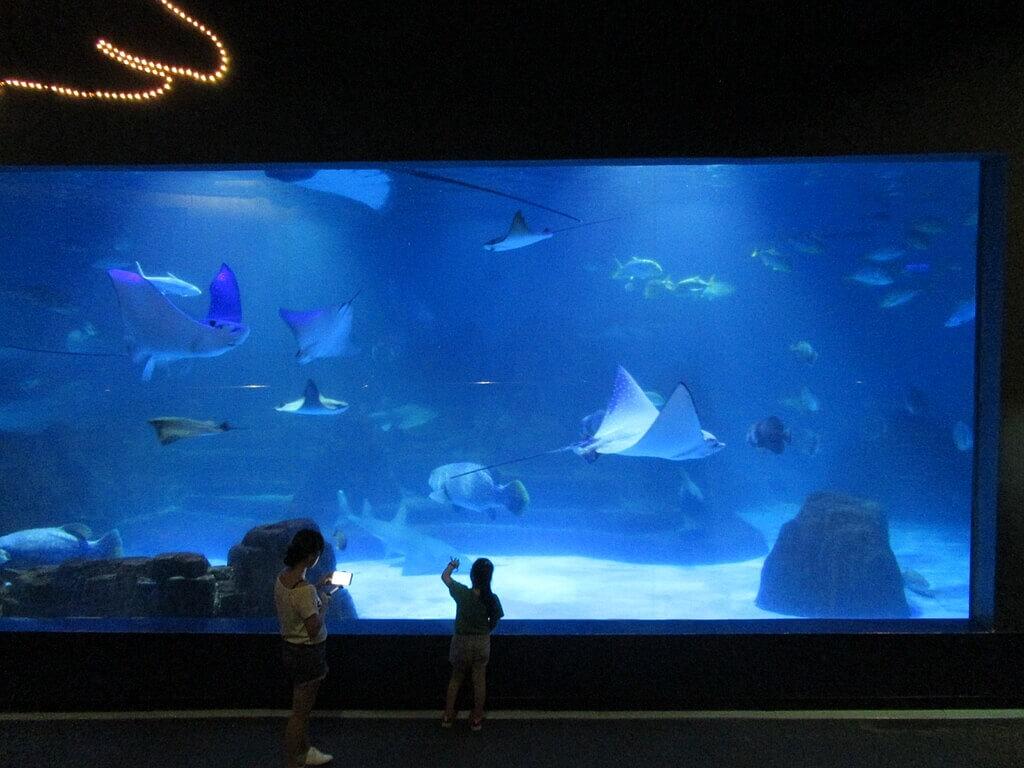 花蓮遠雄海洋公園的圖片:巨型魚類水族箱
