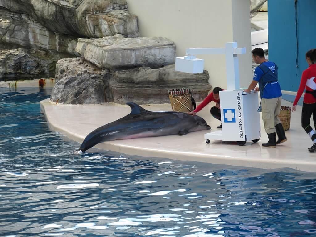 花蓮遠雄海洋公園的圖片:海豚表演(123655561)