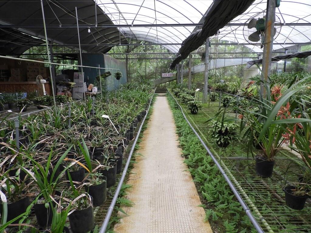 關西仙草博物館的圖片:花藝館