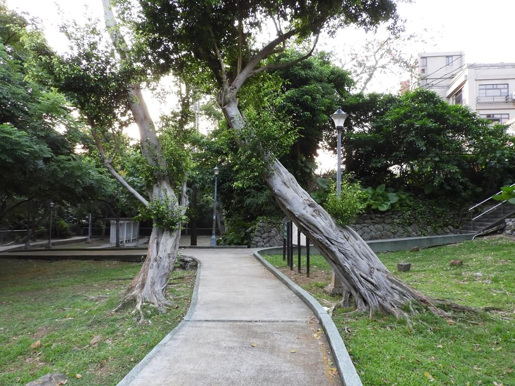 北投泉源公園溫泉泡腳池園區的圖片:兩棵像夫妻樹的老樹