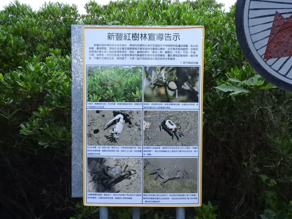 新豐紅樹林生態保護區的圖片:新豐紅樹林宣導告示