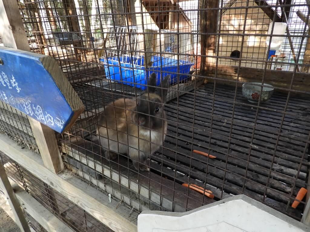 青林農場的圖片:棕黑色的兔子