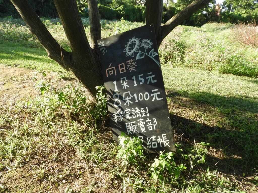 青林農場的圖片:採向日葵的價格