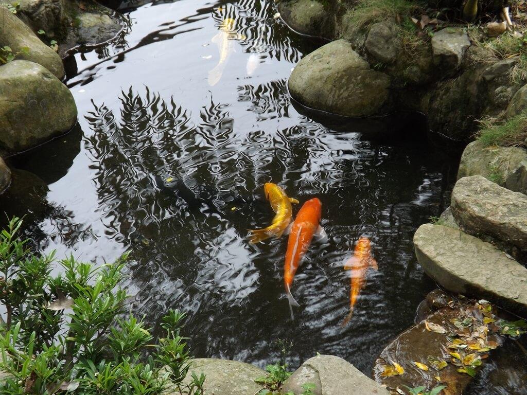 三坑老街的圖片:開庄伯公廟對面的魚池