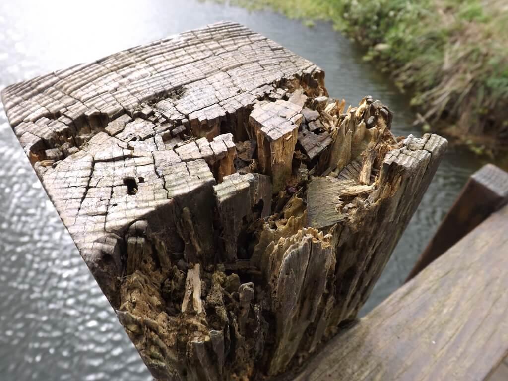 三坑自然生態公園的圖片:舊拱橋上自然風化的木塊