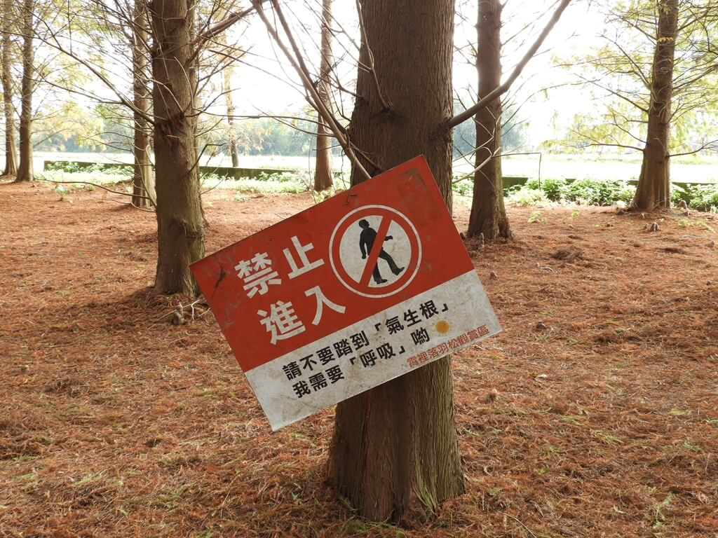 桃園八德落羽松森林的圖片:禁止進入的標語