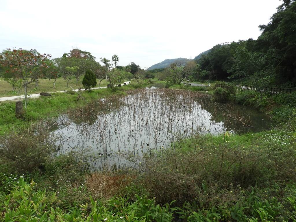 大溪山豬湖親水生態園區的圖片:螢火蟲舞台的雲荷池,一月份荷花剛好凋謝了