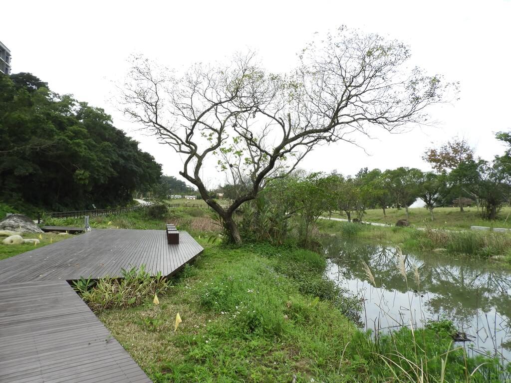 大溪山豬湖親水生態園區的圖片:生態水池木棧道及樹木景緻