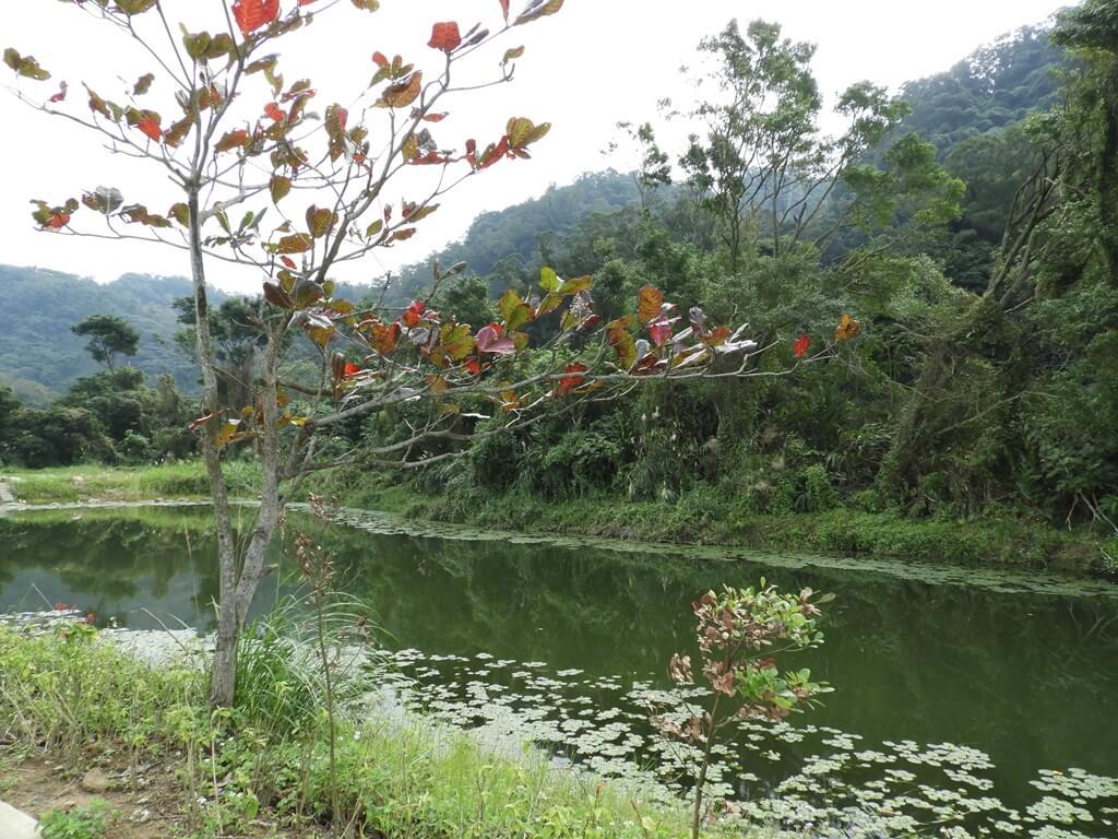 大溪山豬湖親水生態園區的圖片:樹蛙水岸的山影池