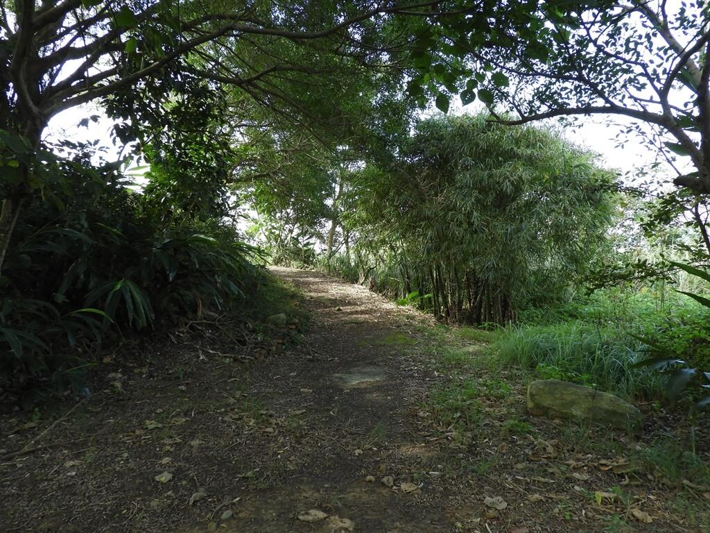 大溪山豬湖親水生態園區的圖片:飛鳶平台旁的一條走道