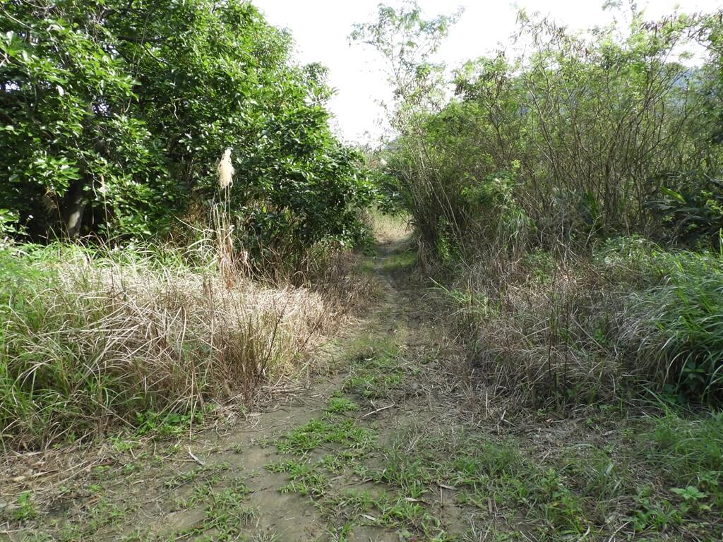 大溪山豬湖親水生態園區的圖片:飛鳶平台旁的生態復育區(123657957)