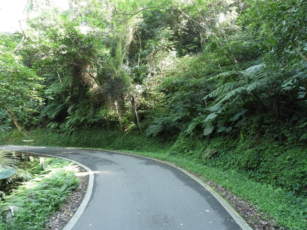 舊百吉隧道的圖片:百吉林蔭步道(123657986)