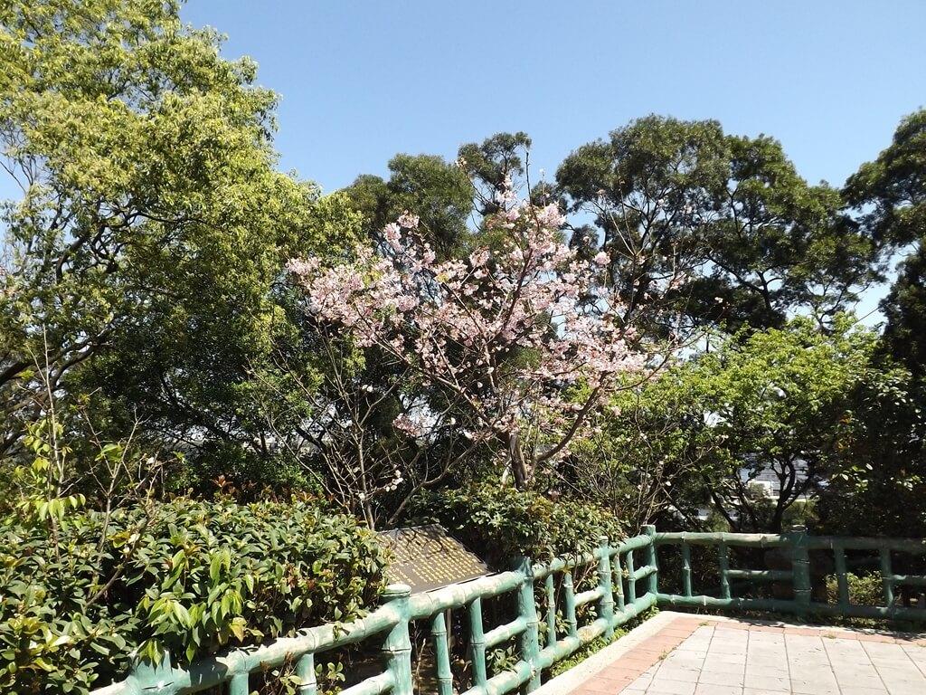 楊梅貴山客家文化公園的圖片:欄杆外的櫻花盛開