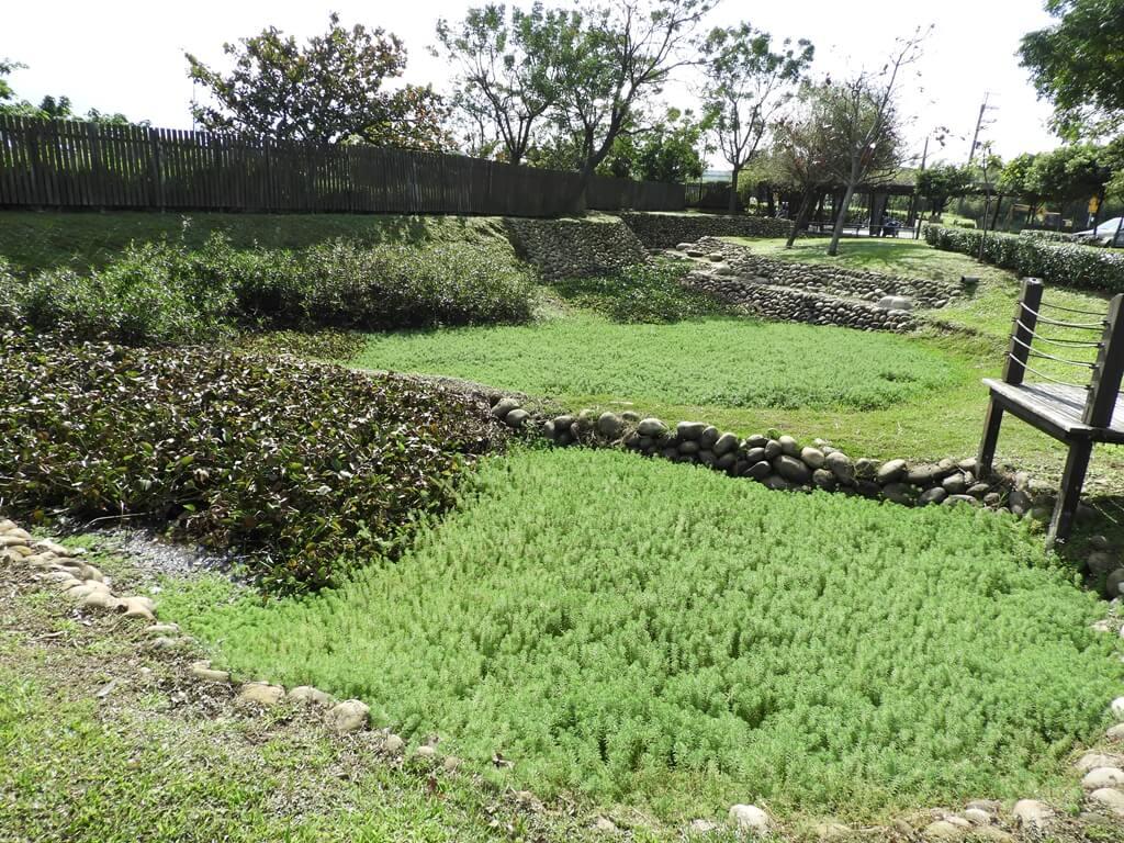 桃園1-4號生態埤塘的圖片:遍佈在生態埤塘上的綠色水生植物