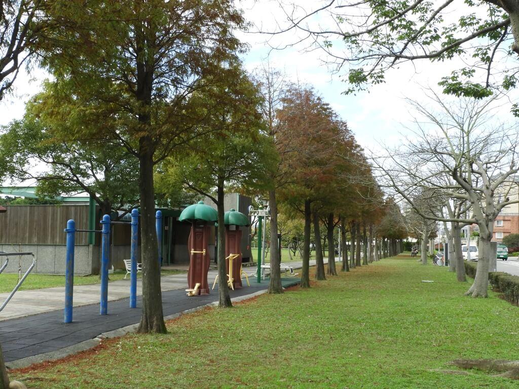桃園玉山公園的圖片:綠草地與落羽松(123658118)