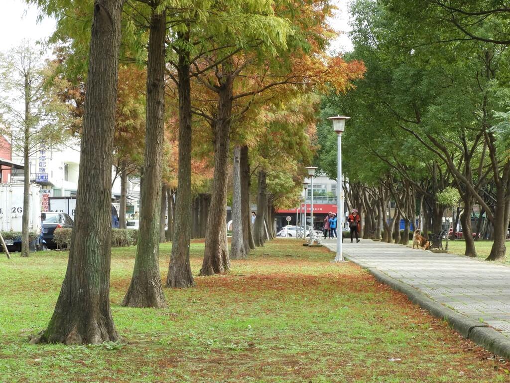 桃園玉山公園的圖片:落羽松(123658119)