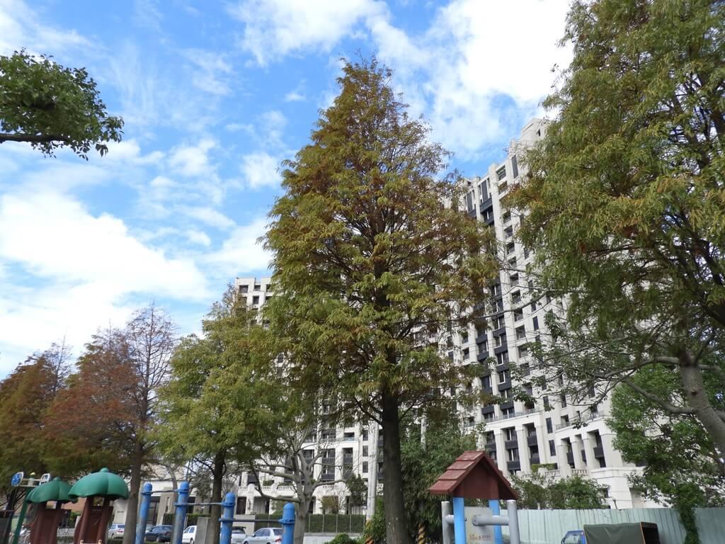 桃園玉山公園的圖片:落羽松(123658121)
