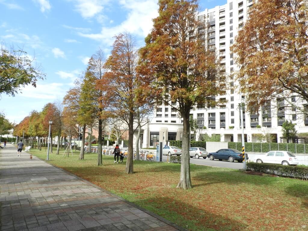 桃園玉山公園的圖片:落羽松(123658124)