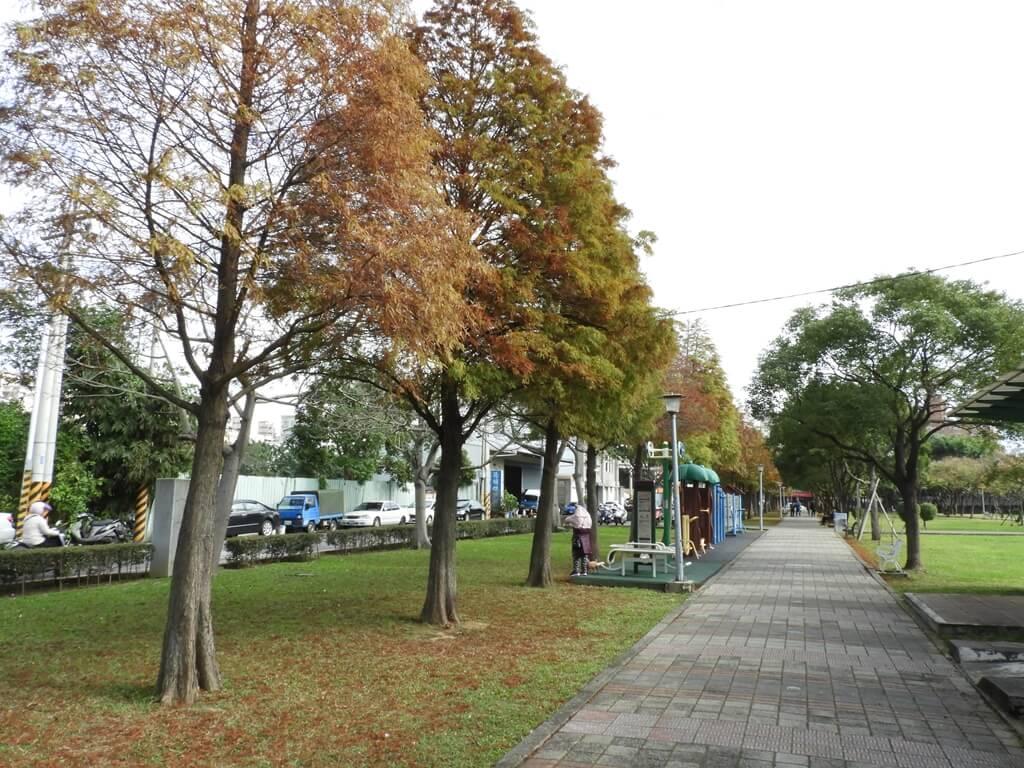 桃園玉山公園的圖片:落羽松(123658125)
