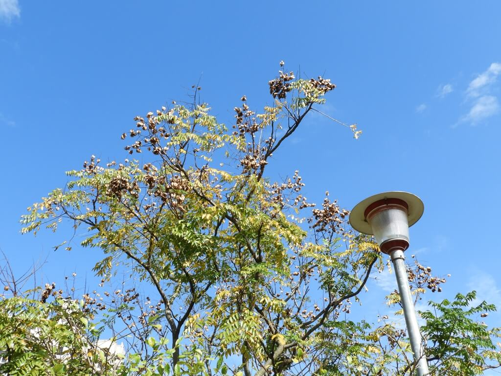 桃園玉山公園的圖片:藍天、樹枝、路燈