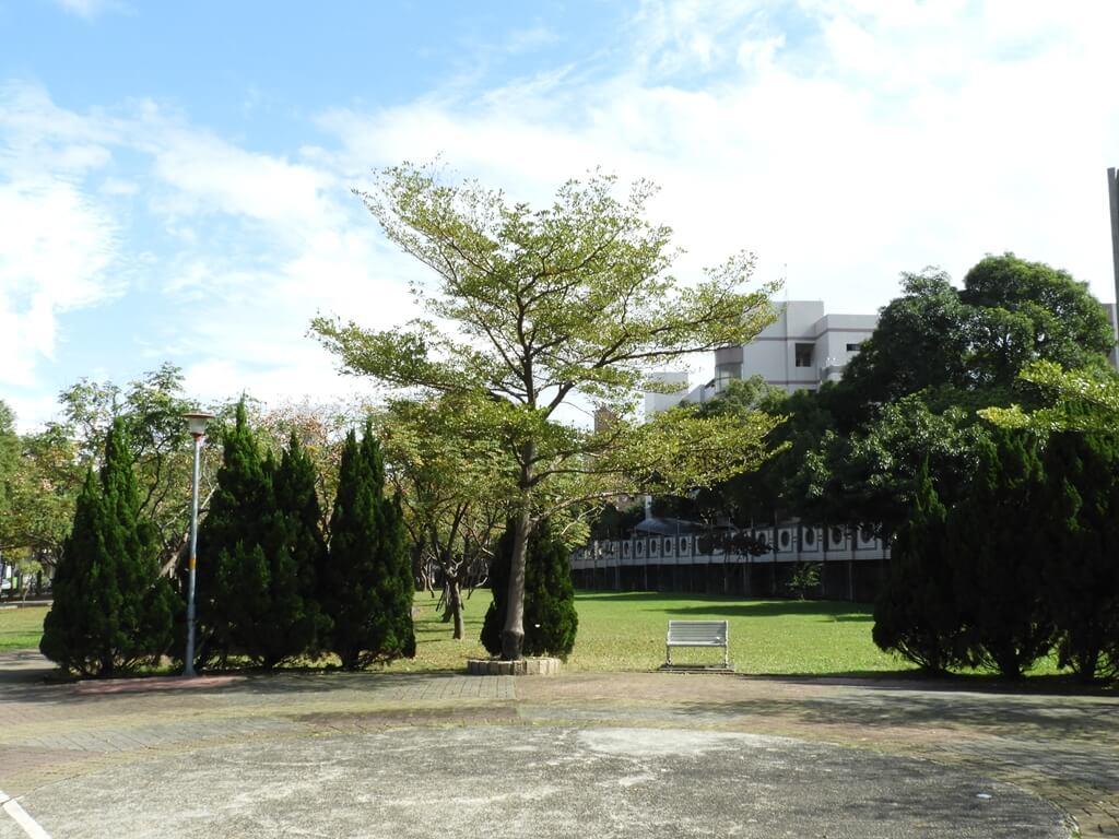桃園玉山公園的圖片:中央廣場旁修整很整齊的樹木