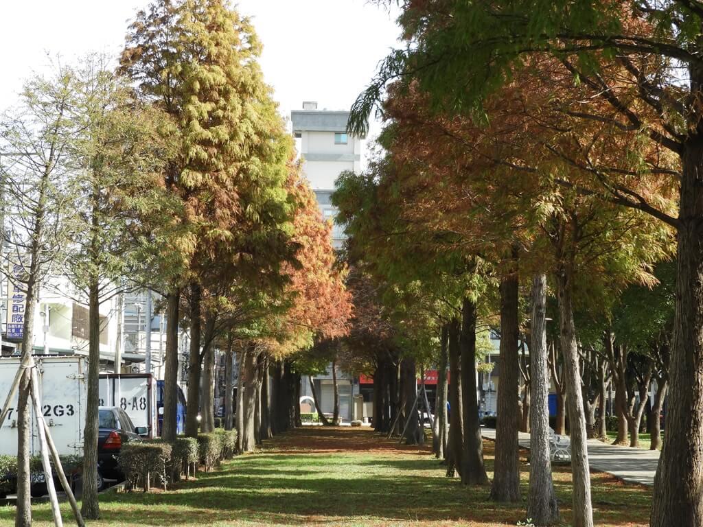 桃園玉山公園的圖片:落羽松(123658151)