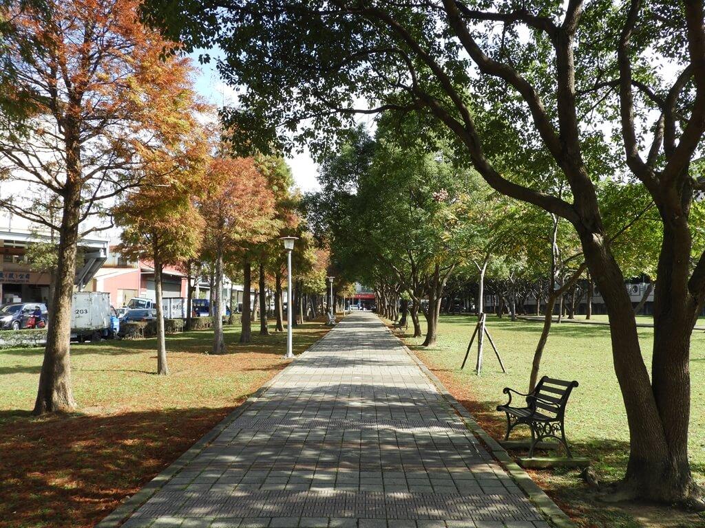桃園玉山公園的圖片:落羽松(123658152)