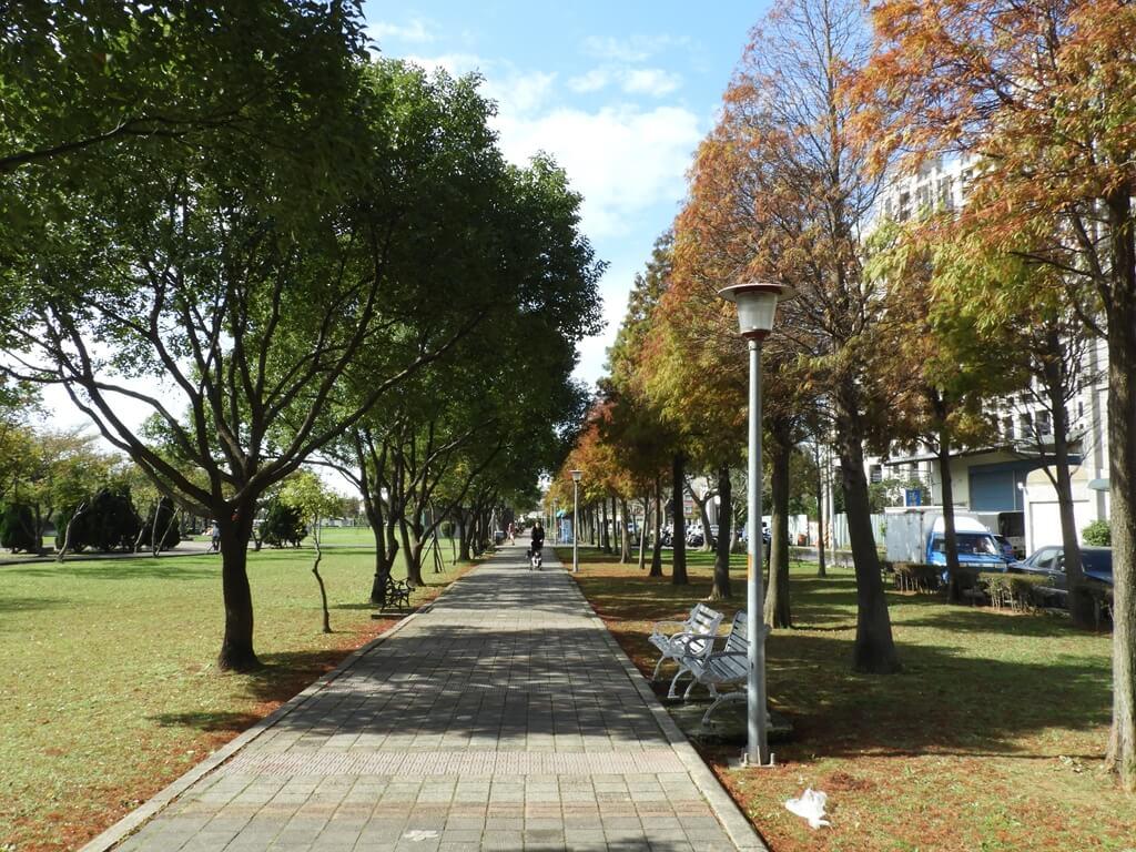 桃園玉山公園的圖片:落羽松(123658154)