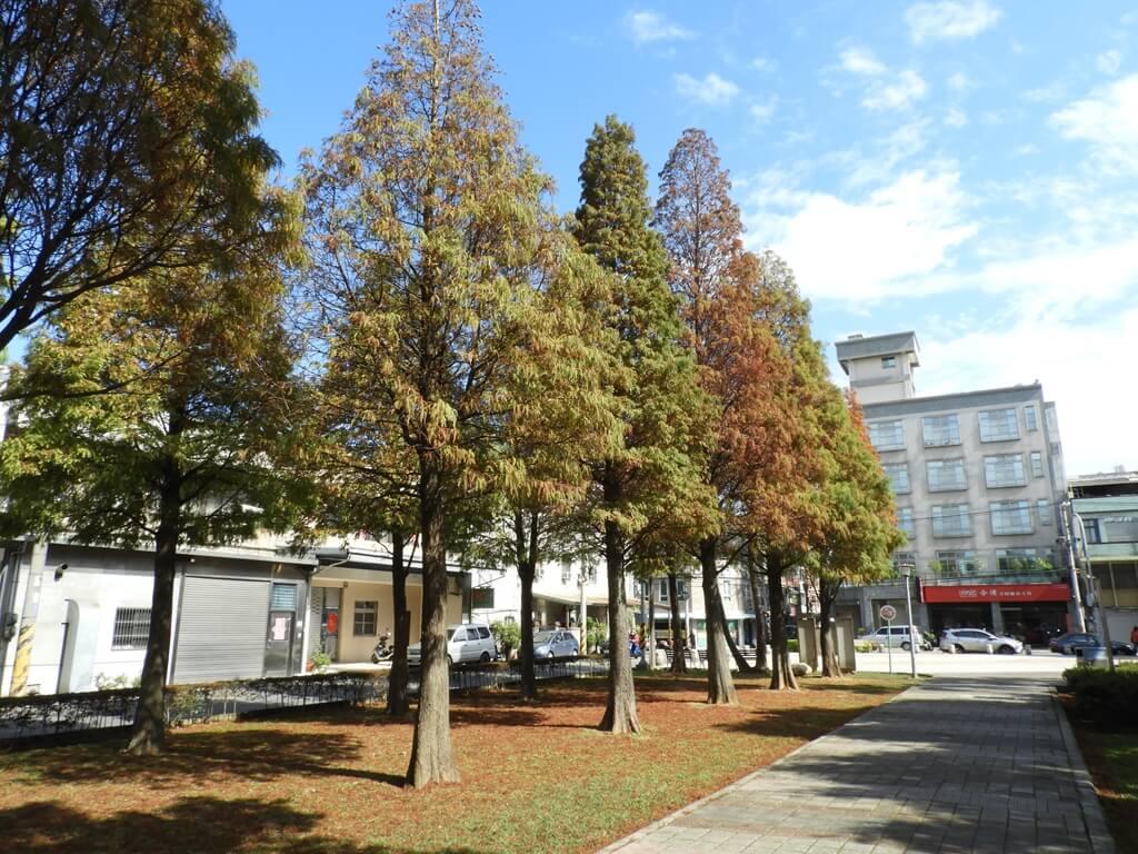 桃園玉山公園的圖片:落羽松(123658155)