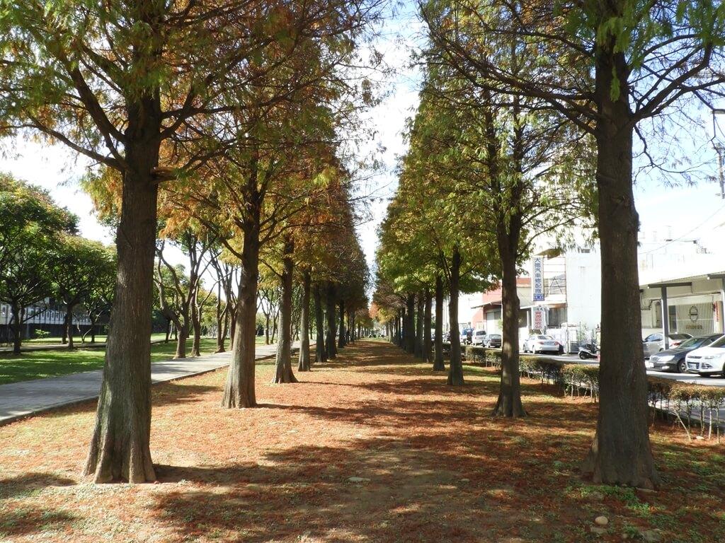 桃園玉山公園的圖片:落羽松(123658156)