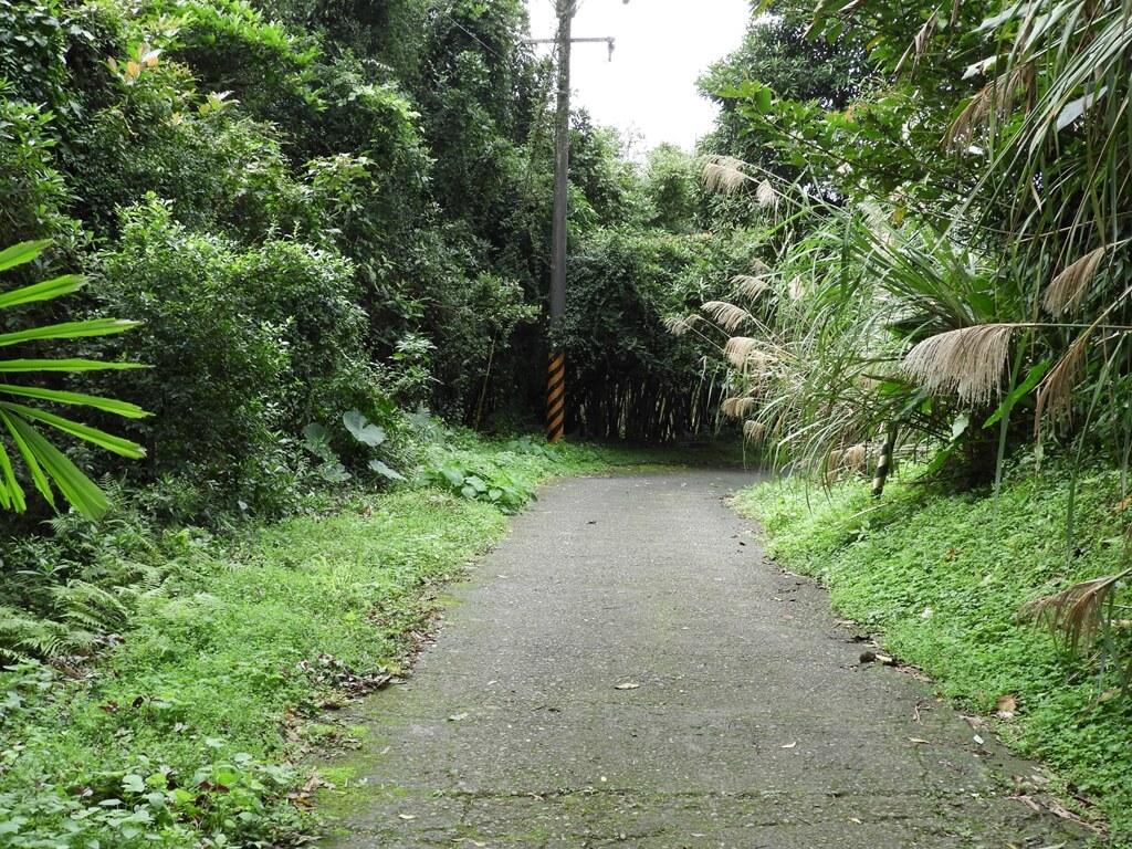 白雞山登山步道的圖片:通往登山步道的產業道路(123658209)