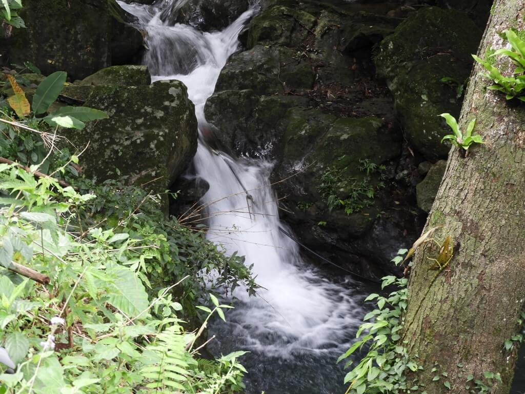 白雞山登山步道的圖片:山峽溪的溪流(123658213)