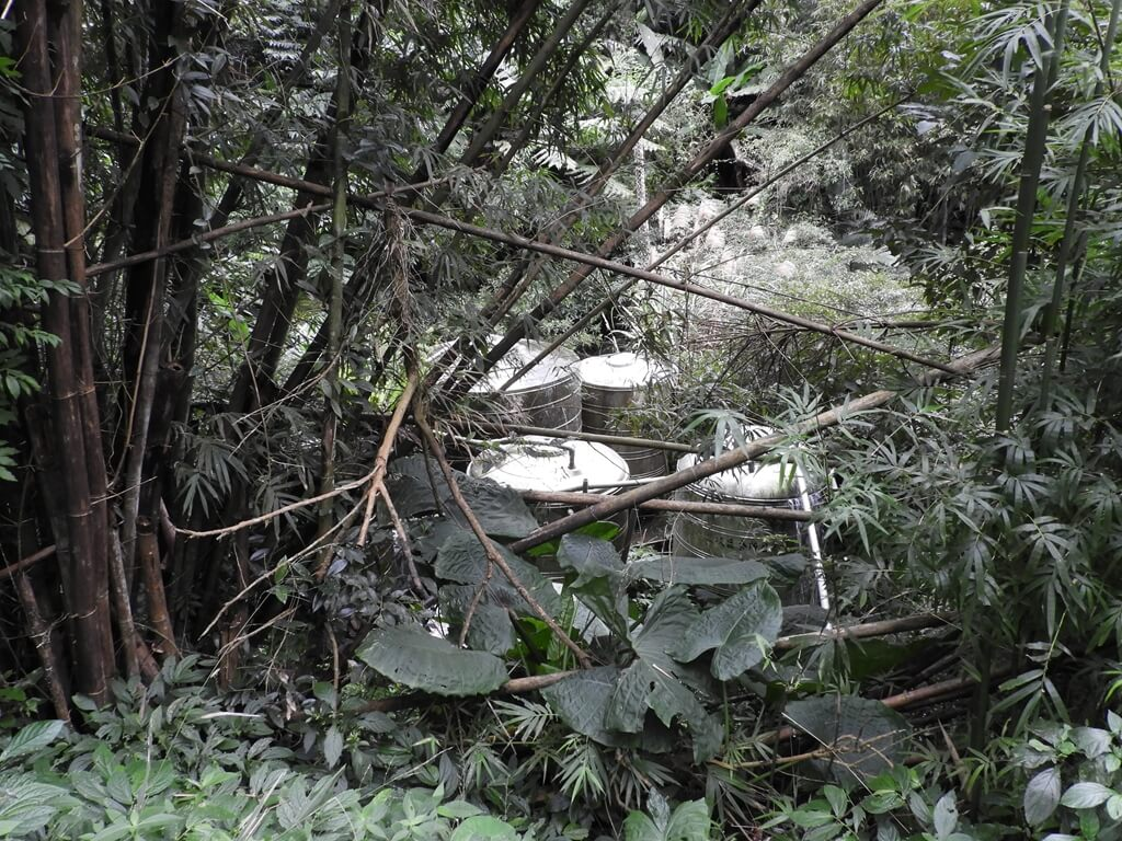 白雞山登山步道的圖片:竹林後的水塔