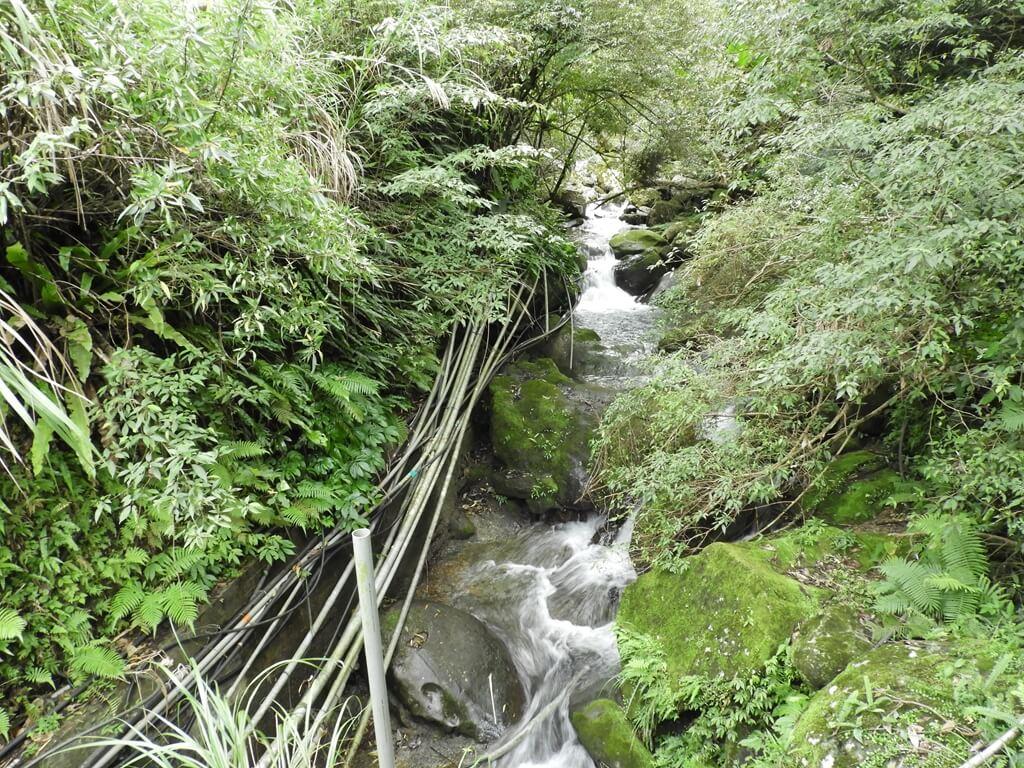 白雞山登山步道的圖片:水泥橋上拍的山峽溪