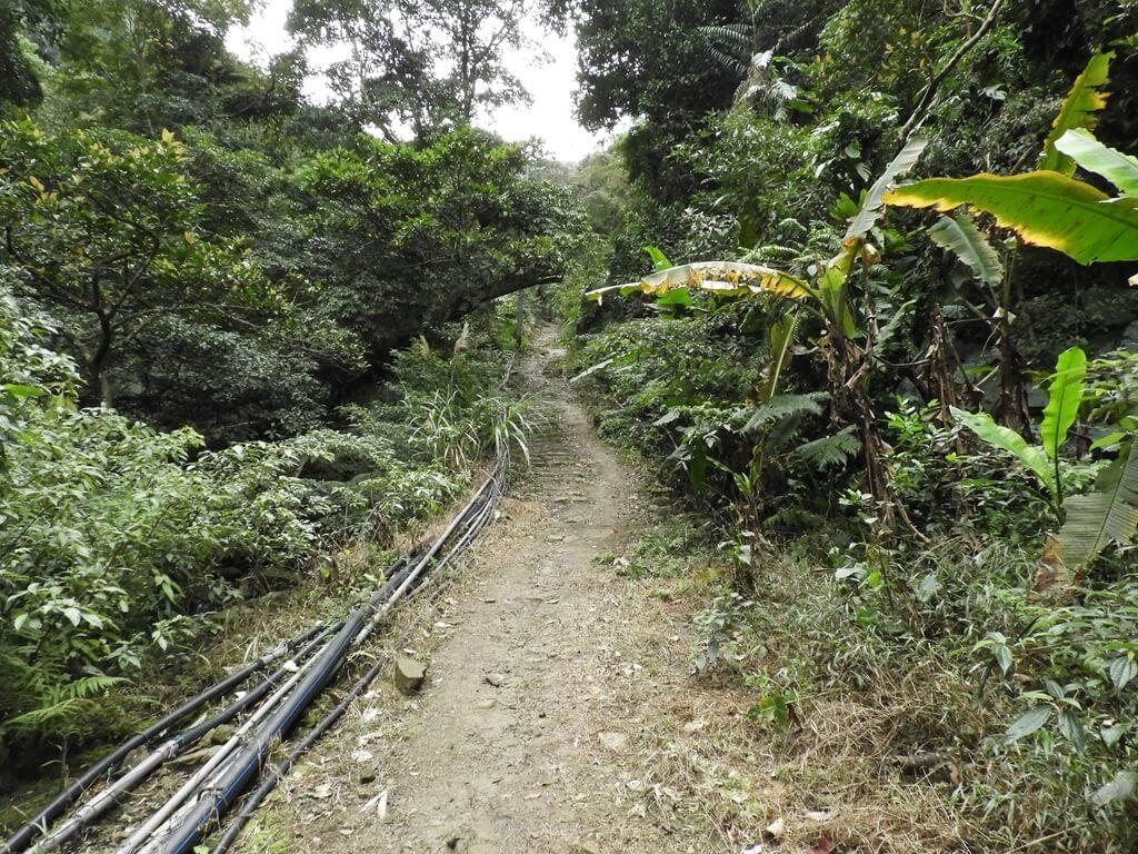 白雞山登山步道的圖片:白雞山步道(123658229)