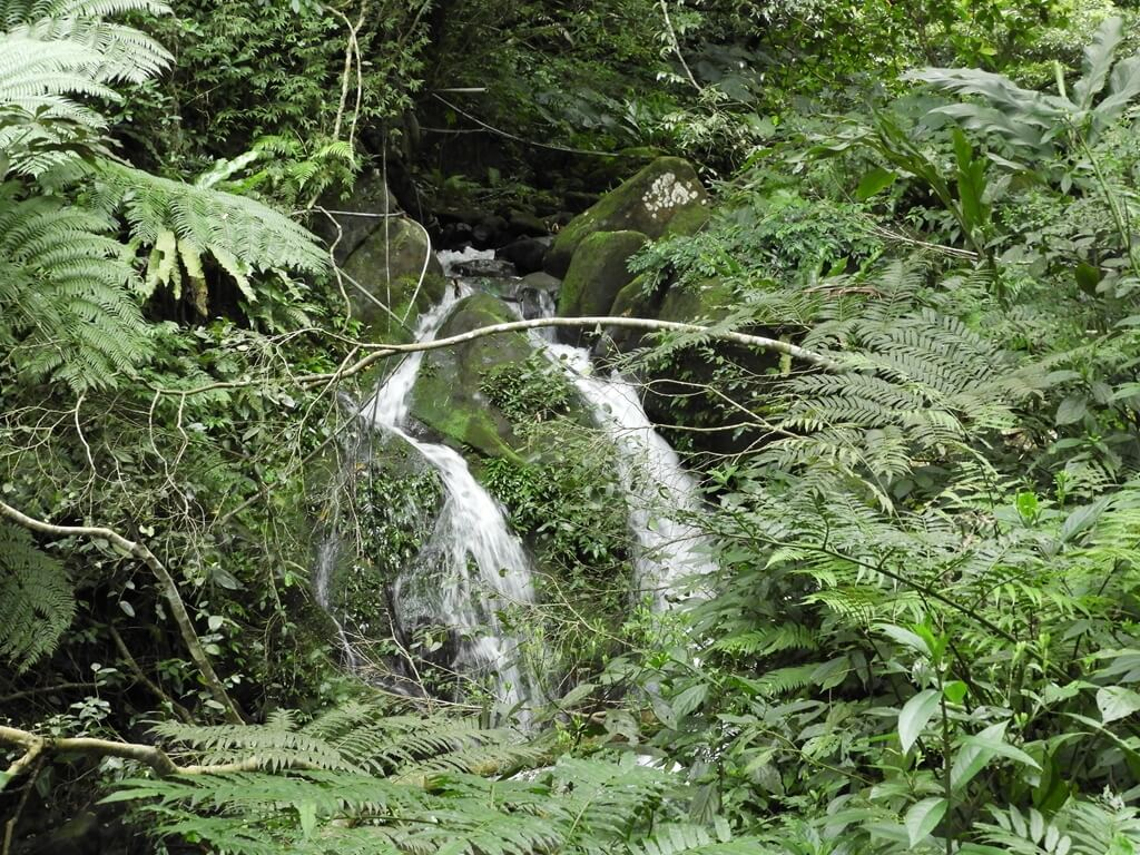 白雞山登山步道的圖片:步道旁非常清澈的山峽溪