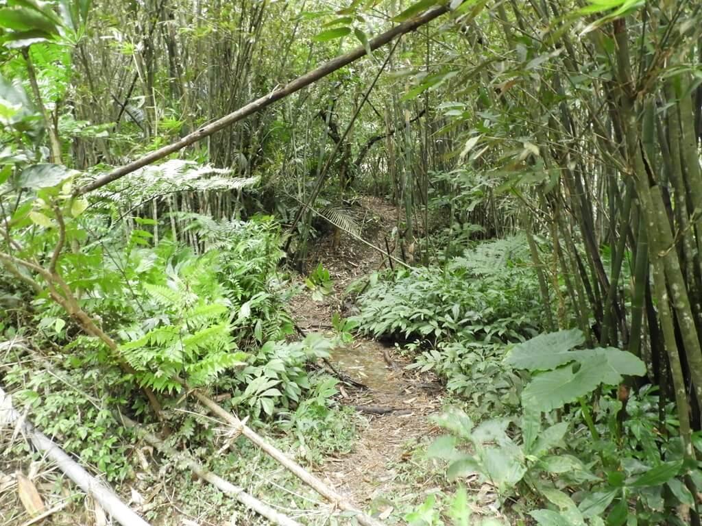 白雞山登山步道的圖片:步道旁的竹林小路