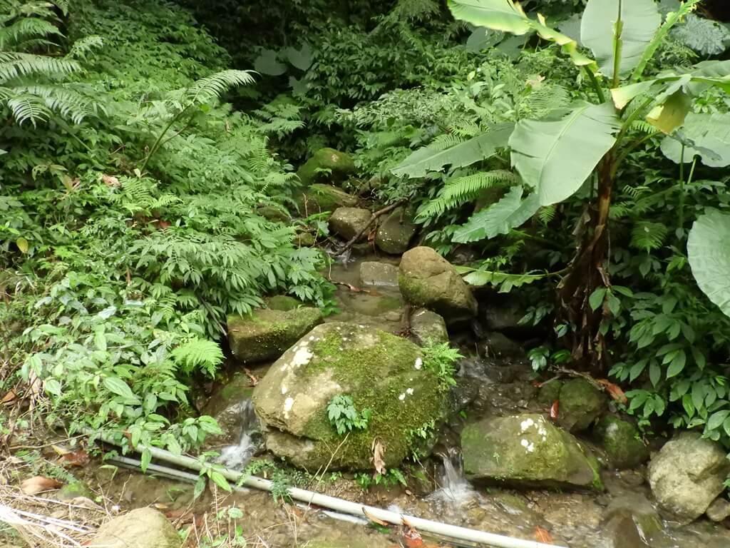 白雞山登山步道的圖片:山峽溪(123658250)