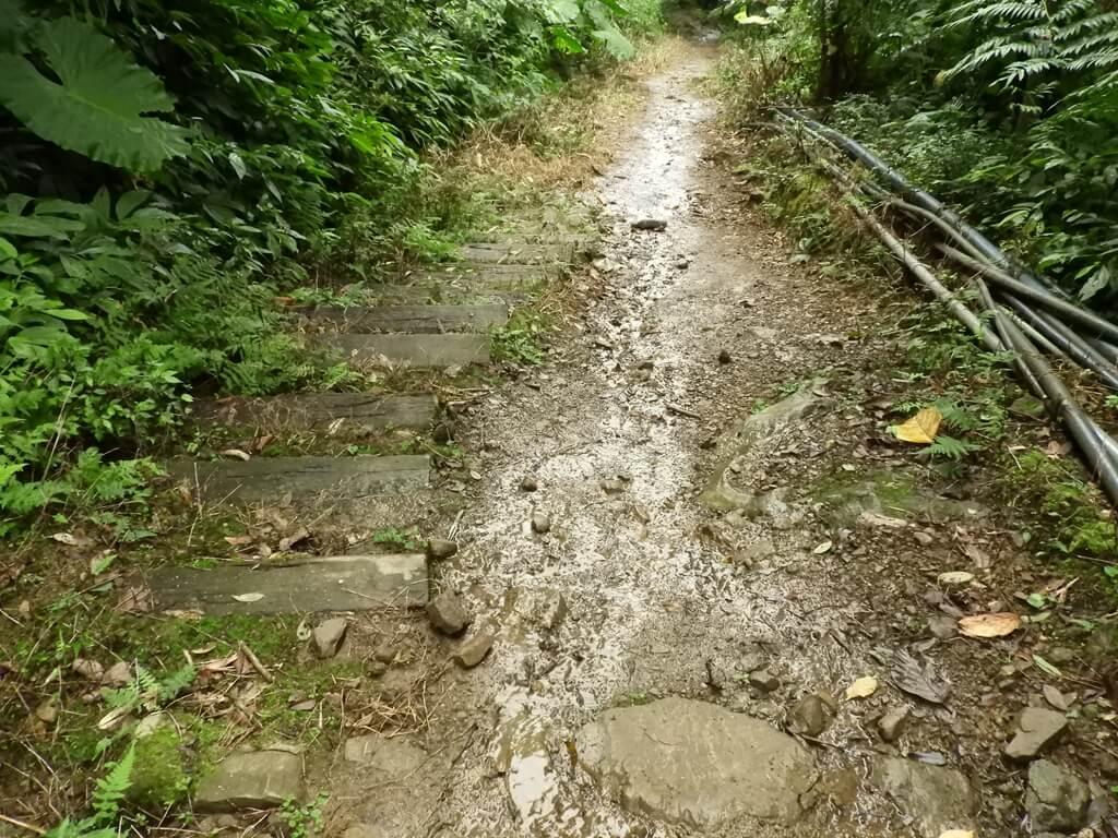白雞山登山步道的圖片:白雞山步道(123658256)