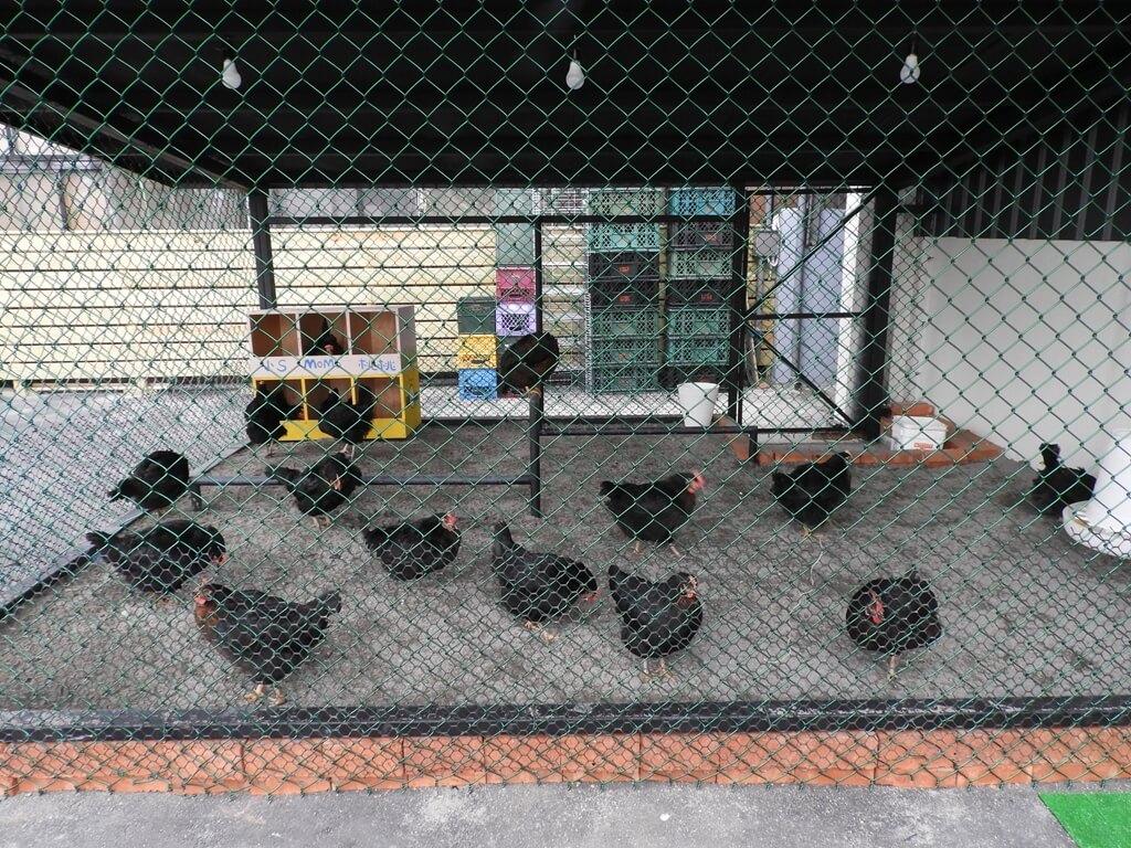 蛋寶生技不老村的圖片:停車場旁的養雞籠