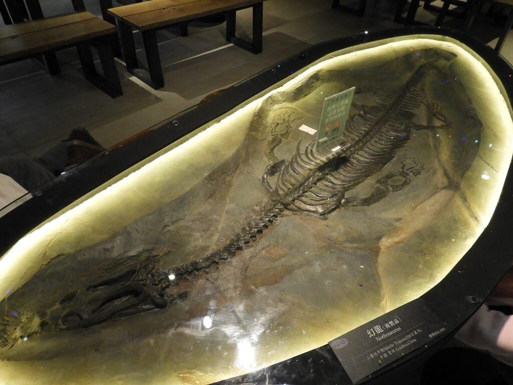國立臺灣科學教育館的圖片:桌上的恐龍化石造形