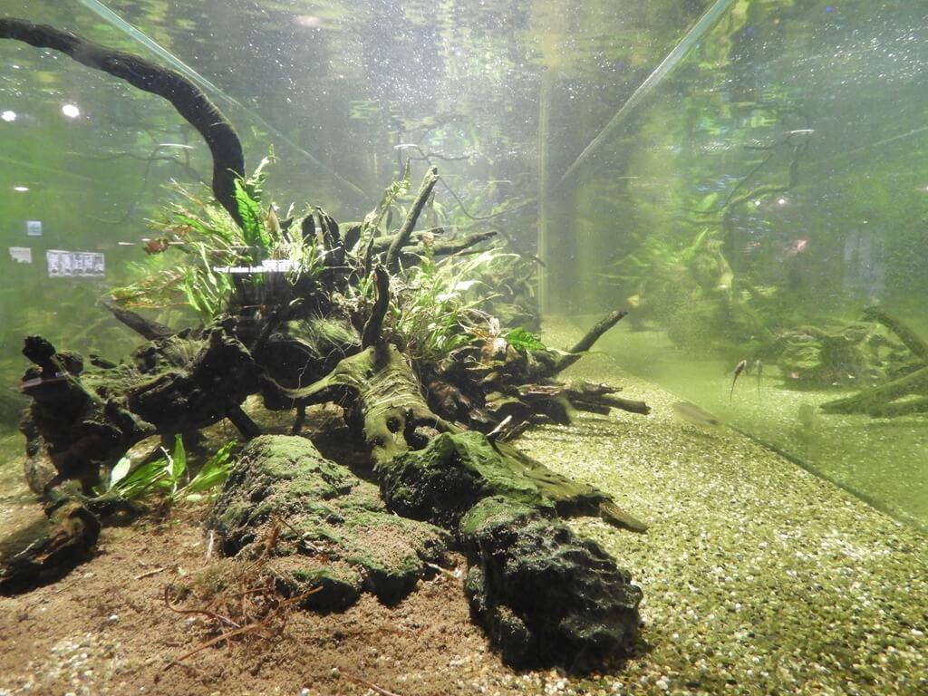 國立臺灣科學教育館的圖片:魚缸