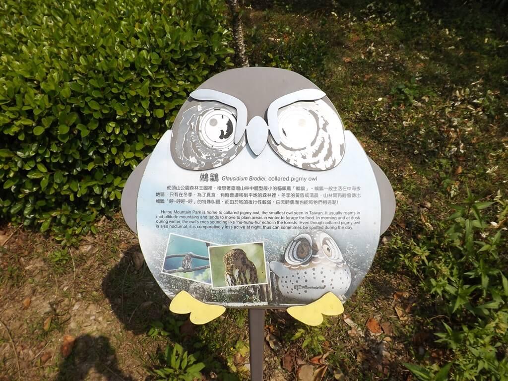 奧爾森林學堂的圖片:奧爾森林學堂主角貓頭鷹介紹