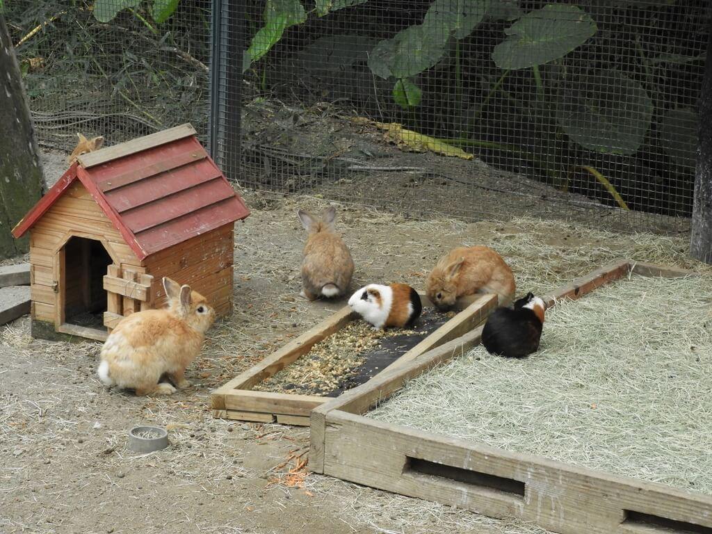 綠世界生態農場的圖片:三隻兔子及兩隻天竺鼠