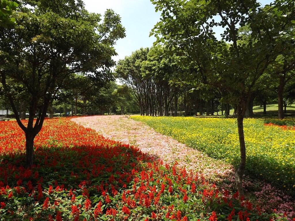 大溪埔頂公園的圖片:紅色、粉紅色、黃色的草花花圃就像柔軟的彈簧床