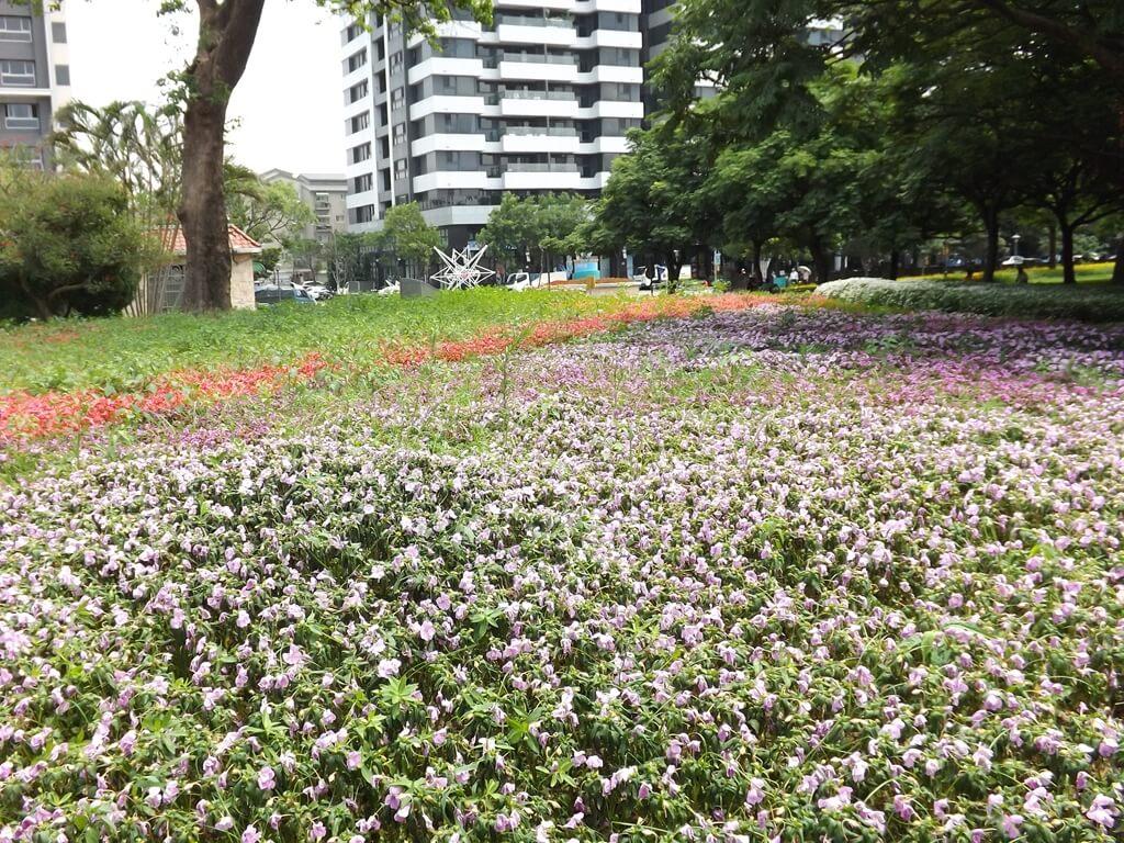 大溪埔頂公園的圖片:粉紫色草花花圃