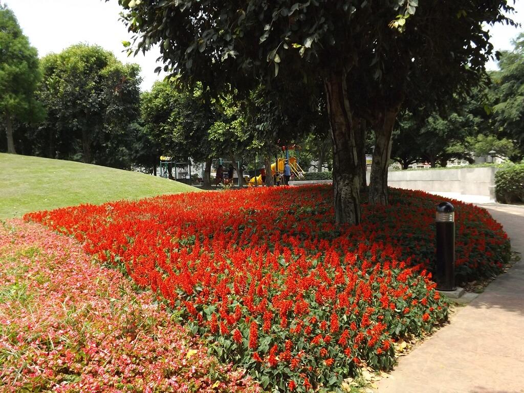 大溪埔頂公園的圖片:粉色與紅色的花圃,旁邊是草地斜坡